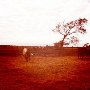 Ponies on Assateague